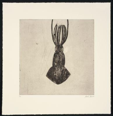 Boxer Squid