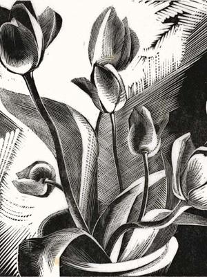 Tulips 1926