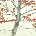 ALI MORGAN Spring - Summer - Autumn - Winter - Forty Tree Drawings Autumn 07