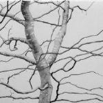 ALI MORGAN Spring - Summer - Autumn - Winter - Forty Tree Drawings Spring 06