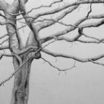 ALI MORGAN Spring - Summer - Autumn - Winter - Forty Tree Drawings Spring 10