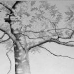 ALI MORGAN Spring - Summer - Autumn - Winter - Forty Tree Drawings Summer 01