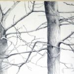 ALI MORGAN Spring - Summer - Autumn - Winter - Forty Tree Drawings Winter 04