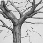 ALI MORGAN Spring - Summer - Autumn - Winter - Forty Tree Drawings Winter 05