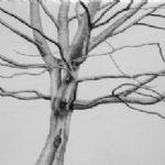 ALI MORGAN Spring - Summer - Autumn - Winter - Forty Tree Drawings Winter 08
