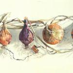 Lillias August Four Onions
