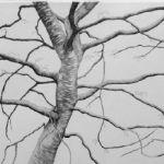 ALI MORGAN Spring - Summer - Autumn - Winter - Forty Tree Drawings Spring 07