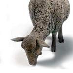 Willow Legge - Two Sheep Grazing